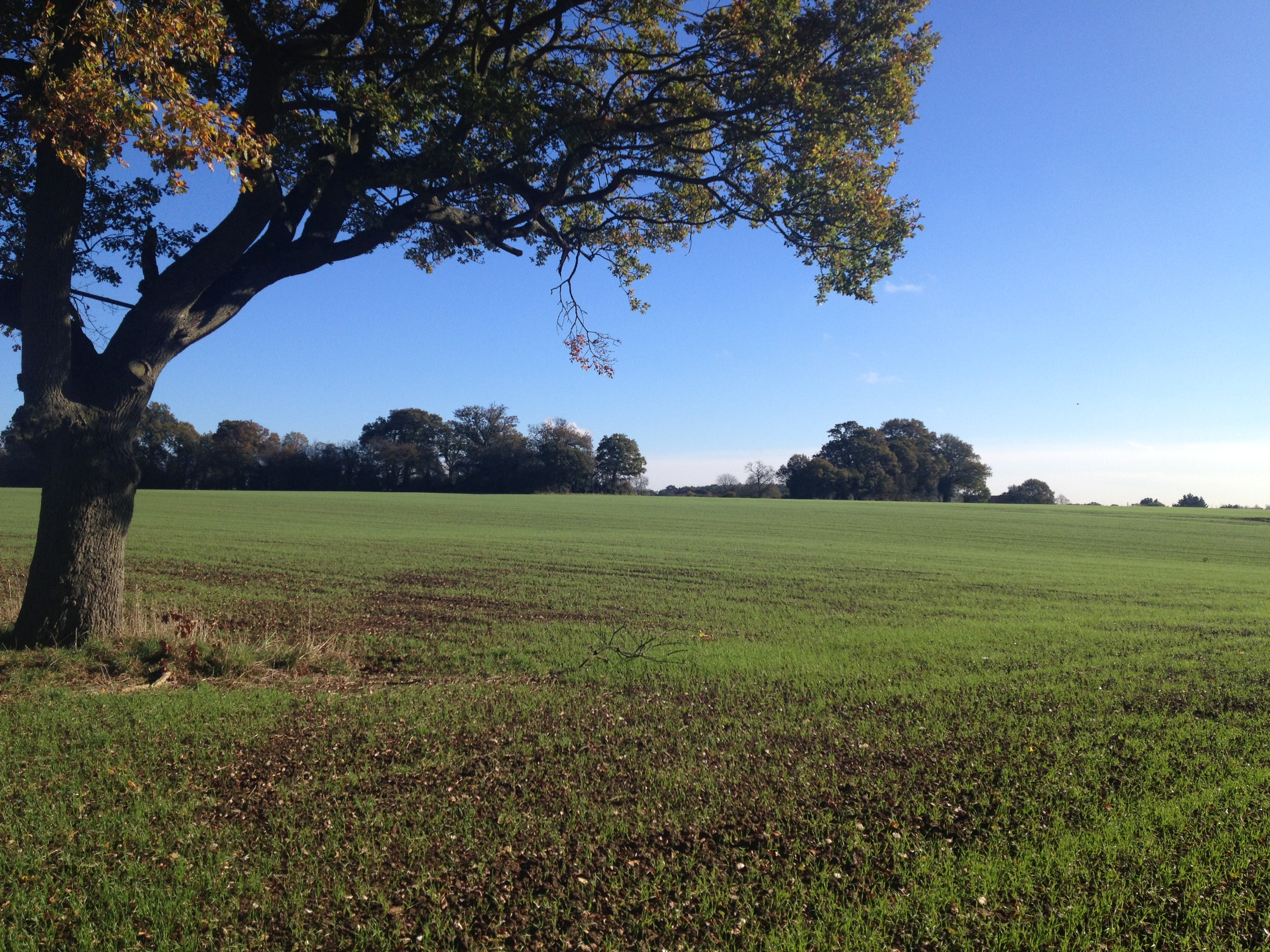 2014-11-04-wigmore-01-field-shot-nice-winter-scene.jpg