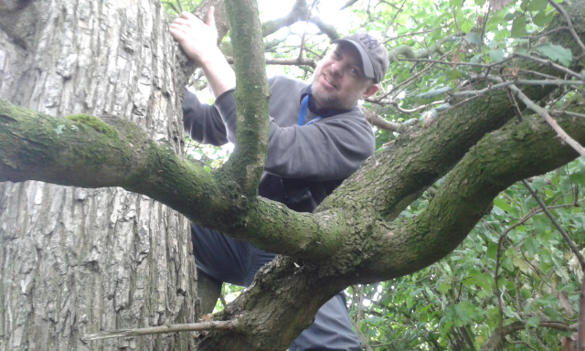 2015-07-15-apsley-03-paul-up-a-tree-at-elementary-dr-watson