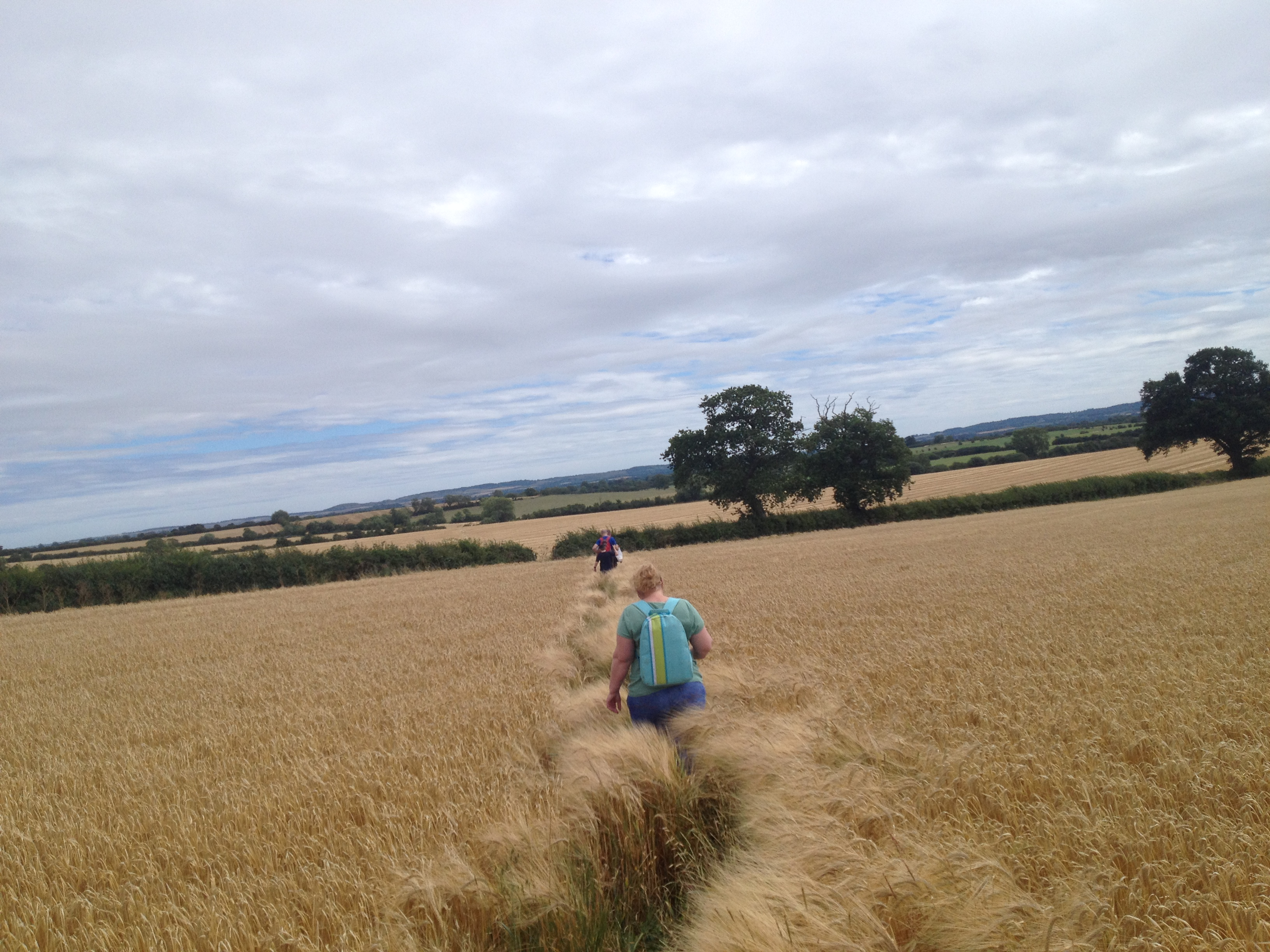 2015-08-09-widgeon-07-shar-sam-geoff-and-graham-walking-through-crop-field-into-the-distance