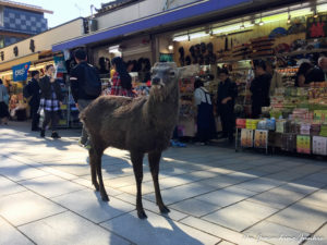 The Magic of the Ancient City of Nara