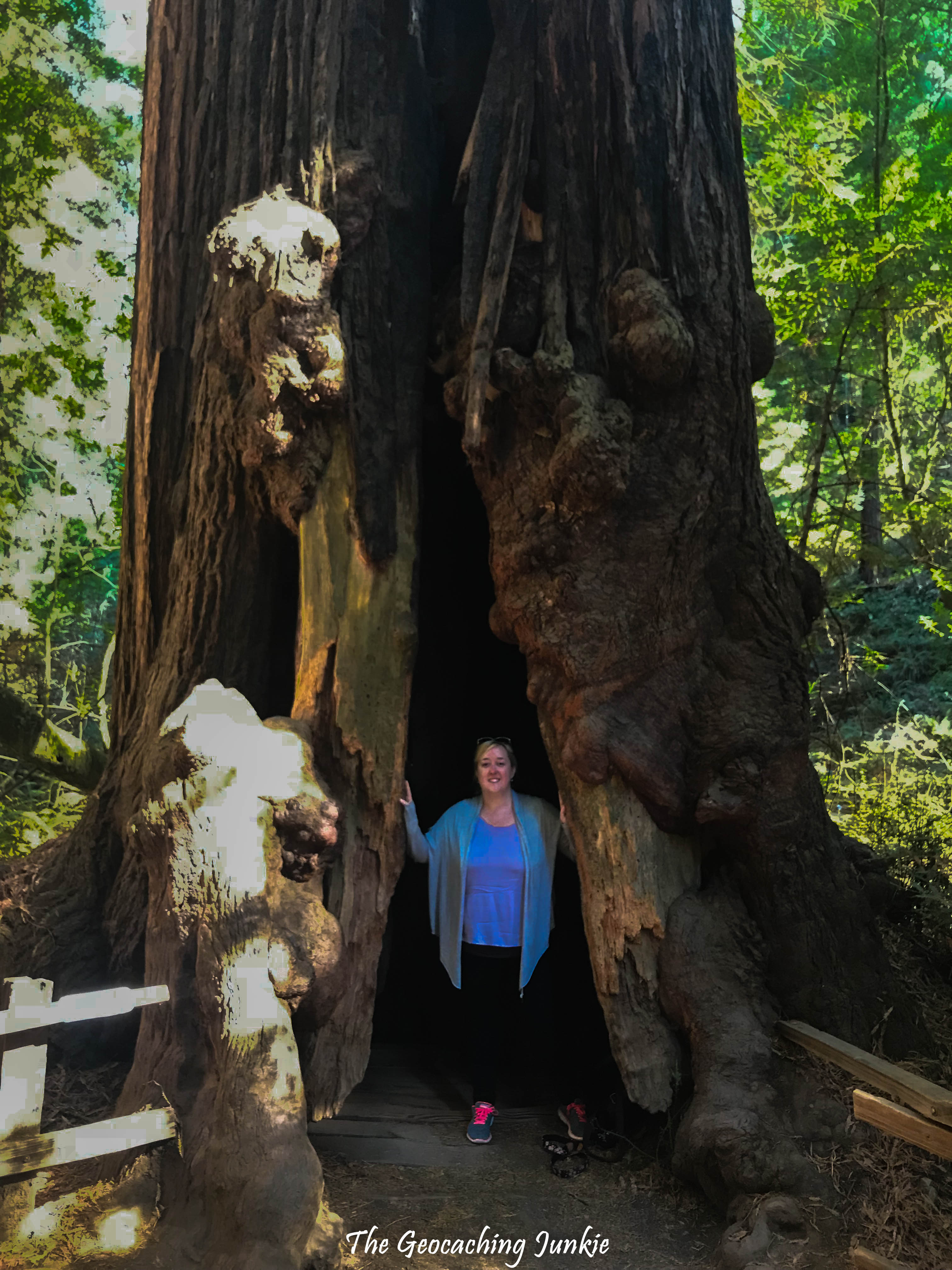 2b854068ba0d4 Muir Woods is Calling and You Must Go | The Geocaching Junkie – The ...